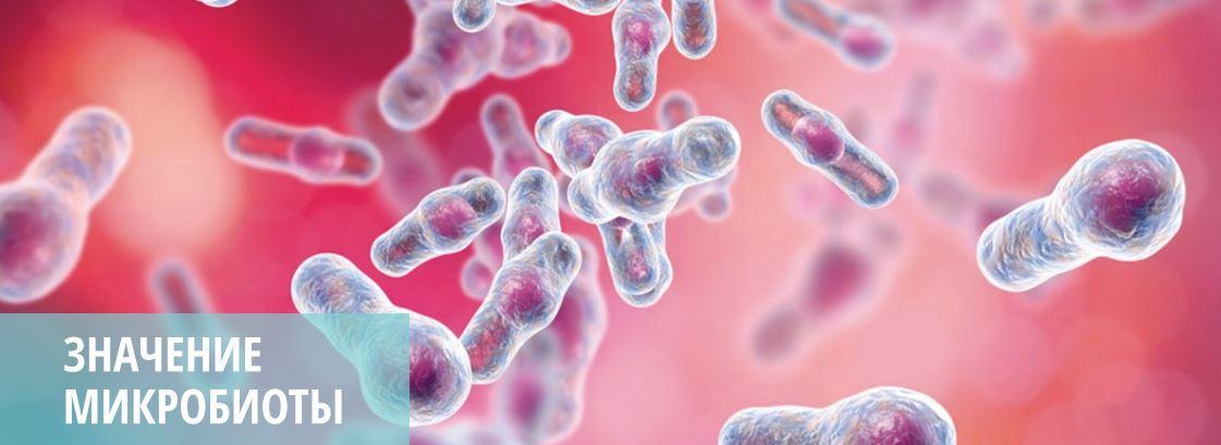 Микробиота кишечника по Осипову HBP-Group